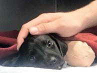 Sevilay Yılman: Hayvanlar alemi sana çok şey borçlu yavru köpek!