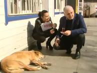 Binali Yıldırım sokak köpeğini sevdi