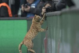 Dünya medyası Beşiktaş maçında sahaya giren kediyi konuşuyor