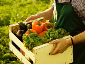 GAP'tan organik üretime dev destek